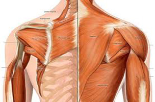 Traitement des douleurs musculaires